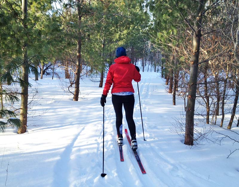 cross country skier within the trees
